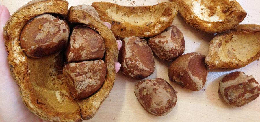 L'huile de carapa procera, le remède miracle contre le psoriasis ?
