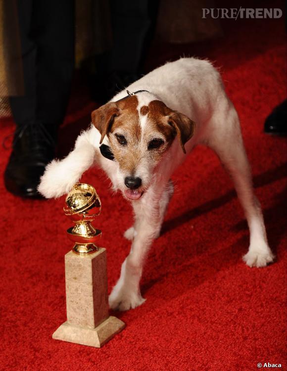 """Uggie, le chien de """"The Artist"""", également récompensé."""