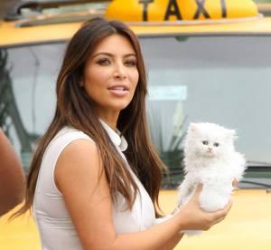 Kim Kardashian et son chat Mercy : une concurrence pour la Choupette de Karl Lagerfled ?
