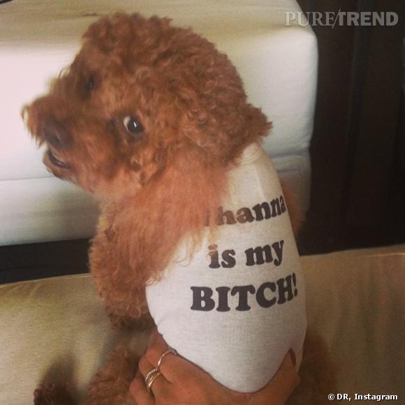 Rihanna adore son petit chien, encore plus quand elle peut l'habiller de ce genre de t-shirt !