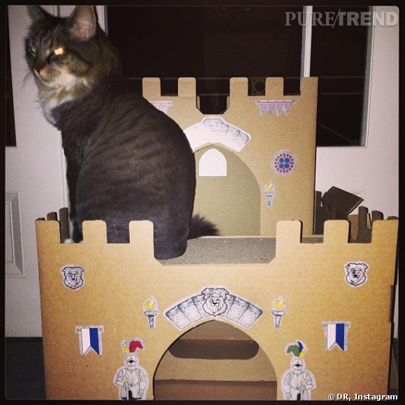 Katy Perry a un drôle de chat... Gardien de château-fort et armé de lasers aux yeux !