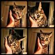 Nina Dobrev profite d'une pause câlins avec son chat.