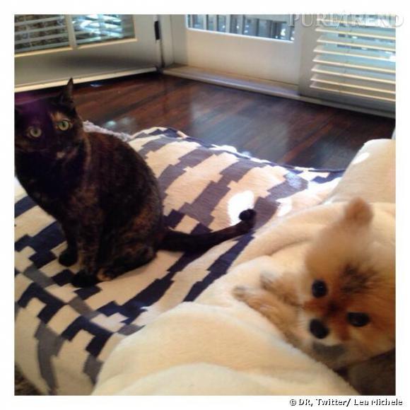 La maison de Lea Michele est pleine d'amour grâce à ses deux boules de poils !