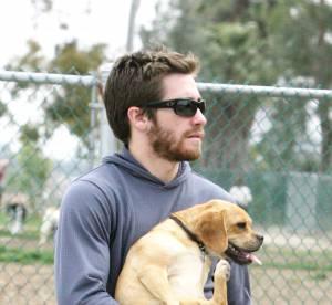Jake Gyllenhaal, Justin Timberlake : des beaux gosses et des chiens