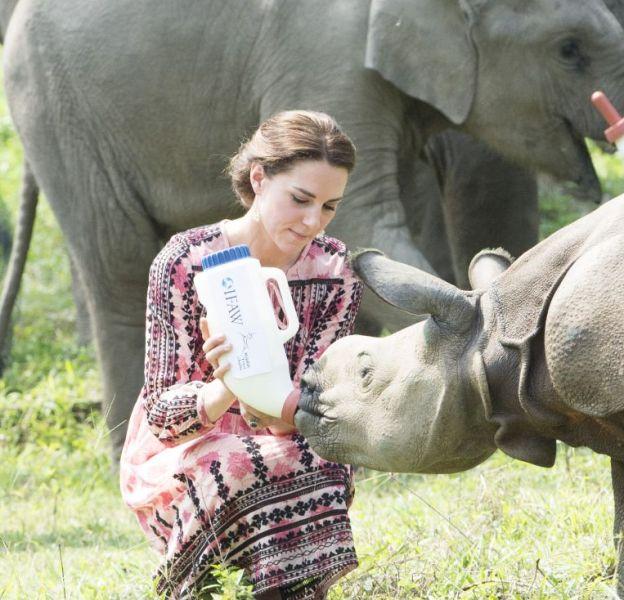 En voyage en Inde, Kate Middleton a donné le biberon à un jeune rhinocéros.