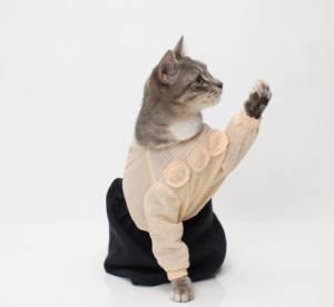 Les chats envahissent le monde