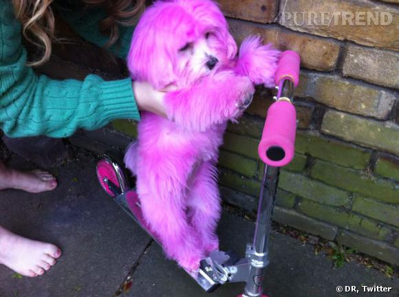 Emma Watson pour une campagne contre le cancer du sein a promené Darcy, le célèbre chien rose... Qui ici fait de la trottinette.