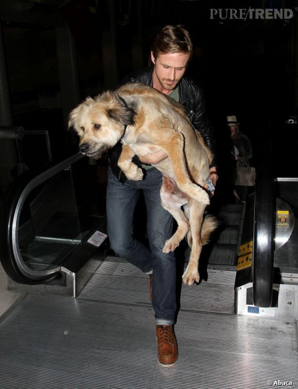 Qui ? Le chien.  Le chien de famille, bon, loyal, serviable. Celui qui joue avec les enfants mais qui aboie au moindre danger. Le chien de famille nous fait nous sentir en sécurité, on l'aime tous. Au moins, lui, il met tout le monde d'accord. On opte pour le même modèle que celui de Ryan Gosling.