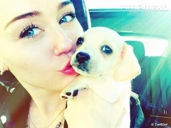 Miley Cyrus n'a pas attendu très longtemps avant d'adopter un nouveau chiot.