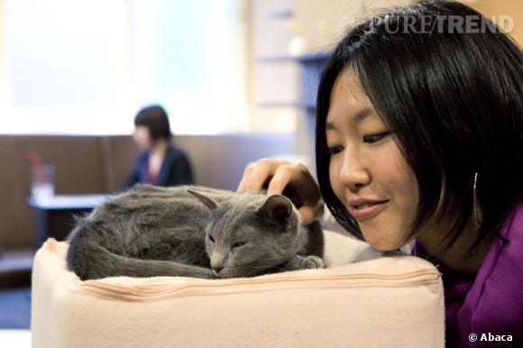 Les bars à chats, ou le monde merveilleux des félins.