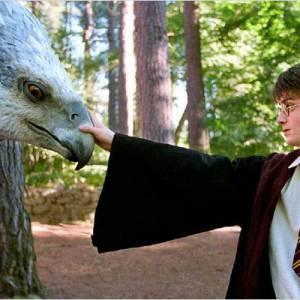"""""""Harry Potter"""" et ses animaux fantastiques : ici un Hippogriffe."""