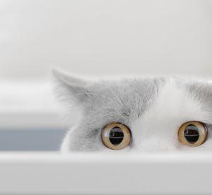 Un chat s'invite sur un défilé et c'est encore plus drôle que vous l'imaginez