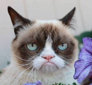 Grumpy cat, bientot star du cinema !