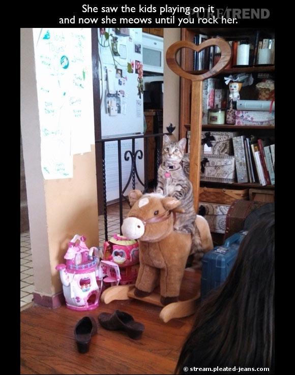 """""""Elle a vu les enfants jouer dessus et depuis elle miaule jusqu'à ce qu'on la fasse se balancer."""" Qui a dit que les chats étaient paresseux ? (Source : stream.pleated-jeans.com)"""