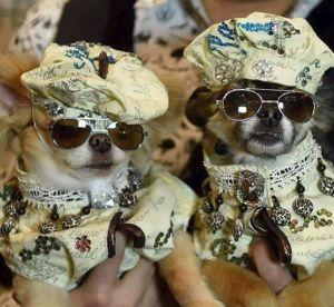 Oui, il y a une Fashion Week pour les chiens et voilà à quoi ça ressemble...