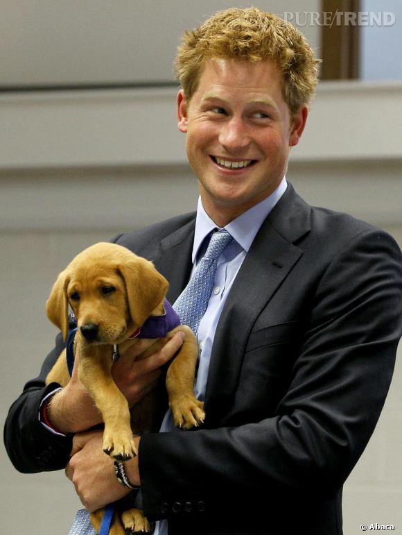 Le Prince Harry adopte un petit labrador roux, assorti à la couleur de ses cheveux. Même leurs sourcils sont identiques.