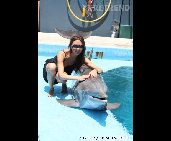 Victoria Bekcham profite de vacances en famille pour caresser des dauphins.