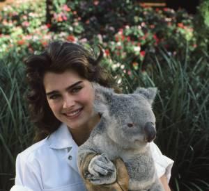 Brooke Shields en 1983 : Brooke et un koala, un joli duo.