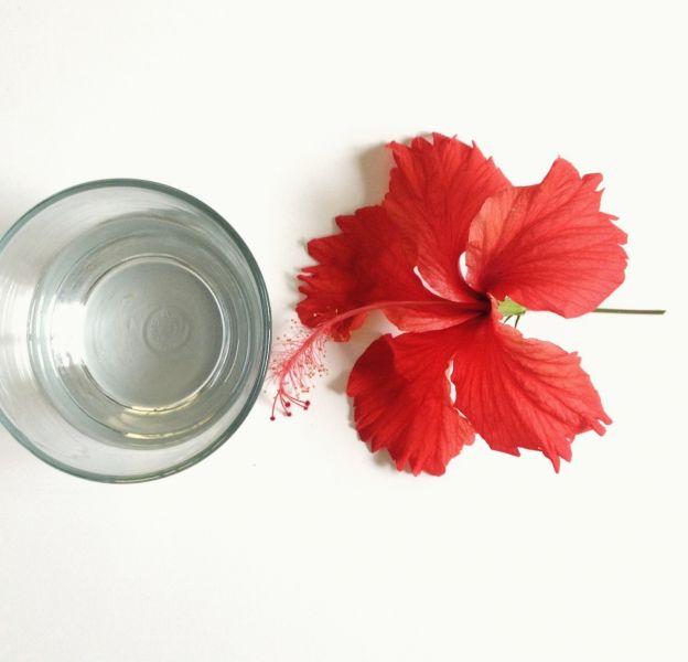 L'hibiscus, une fleur qui nous veut du bien.