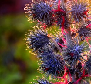 L'huile de ricin : l'astuce naturelle pour les ongles et les cheveux