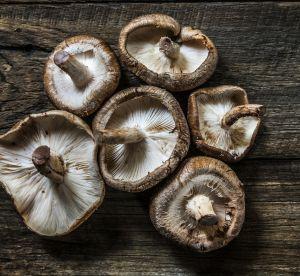 Le champignon, l'avenir de la mode ?