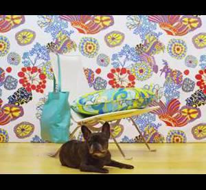 L'insolite du jour : doggy style pour Banana Republic