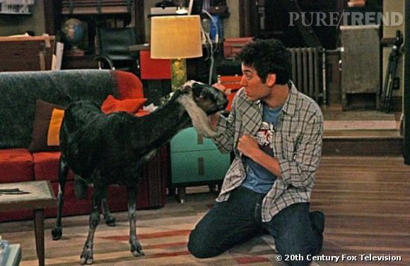 Et surtout... La chèvre.