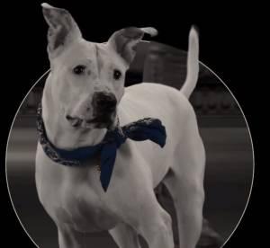 """Ralph Lauren promeut l'adoption des chiens avec """"The Dog Walk"""""""