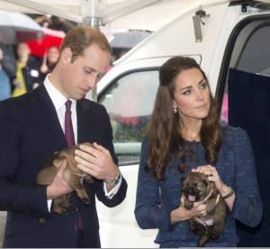 Kate Middleton et le prince William : pause douceur en Nouvelle-Zélande