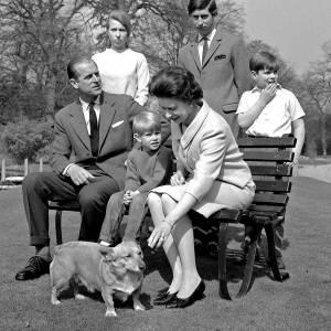 Elizabeth II a possédé une trentaine de corgis. Ici sur une photo de famille en 1968.