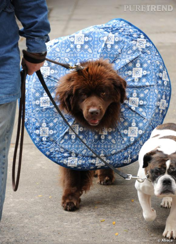 Les Gossip Dogs...