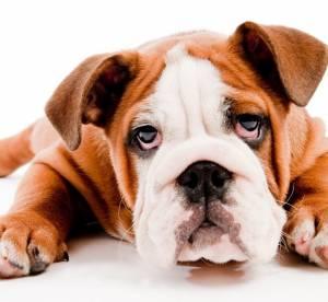 Insolite : du vernis à ongles pour chien