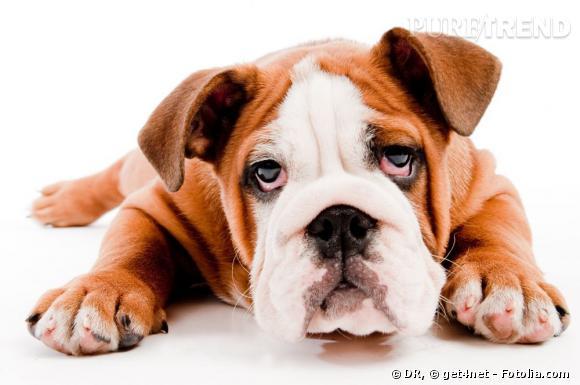 Les chiens subissent la tendance vernis. Ont-ils leur aboiement à donner sur le choix de la couleur ?