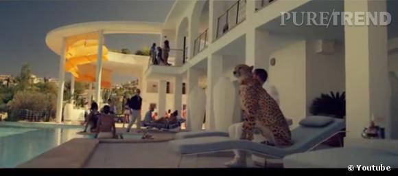 """""""The Counselor"""" nous plonge dans l'univers de la mafia... où les guépards semblent même apprivoisés."""