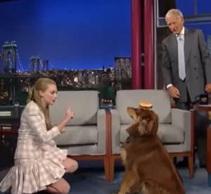 Effectivement, le chien d'Amanda Seyfried est le roi du self-control ! Malgré un hamburger alléchant posé sur sa tête, il ne bouge pas.