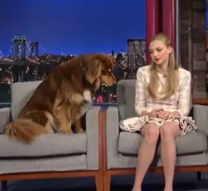 Amanda Seyfried : en pleine promo de Lovelace, son chien Finn fait son show !