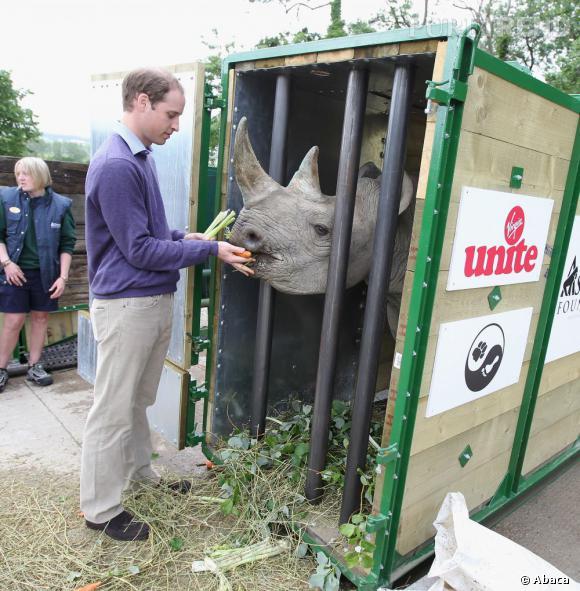Le Prince William est très engagé dans les projets de la Tusk Trust et la preservation de la vie sauvage.