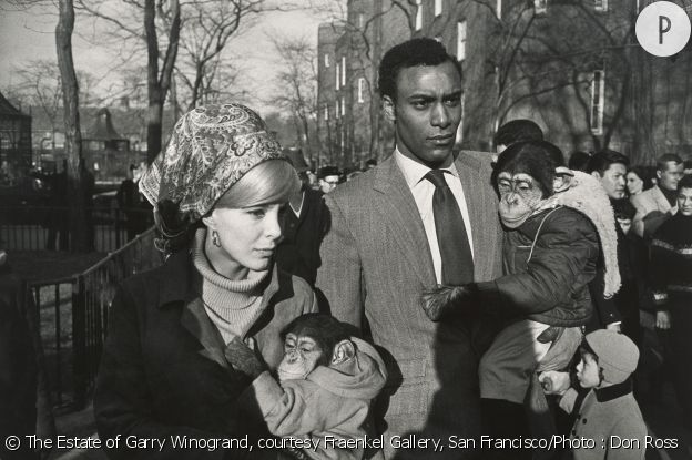 """Central Park Zoo, New York 1967"", Garry Winogrand. Tirage gélatino-argentique. Collection of Randi and Bob Fisher."