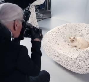 Karl Lagerfeld : sa chatte Choupette presque aussi riche que Dany Boon