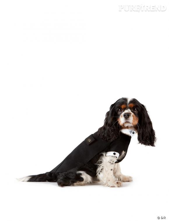 Emporio Armani, prêt-à-porter pour chiens.