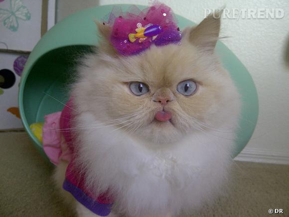 Luna, le chat fashionista.