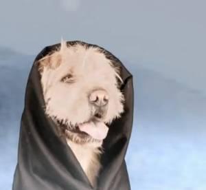 Twilight 5 : la parodie avec des chiens
