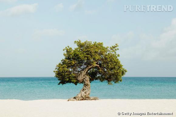 10 top des plus belles plages du monde en 2013 : Plage Eagle Beach à Aruba.