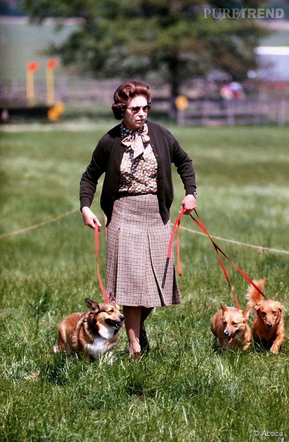 On pourra apprendre aussi aux chiens de la reine à faire le mort.