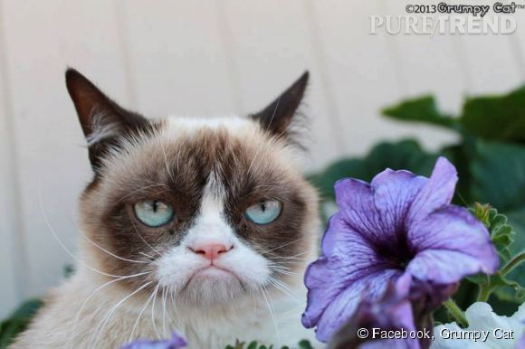 Grumpy Cat : plus riche que Kim kardashian et Cristiano Ronaldo !