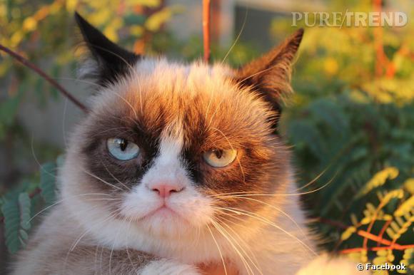 Grumpy Cat, le chat mécontent, a fait beaucoup parler de lui en 2012 et a alimenté de nombreux memes.