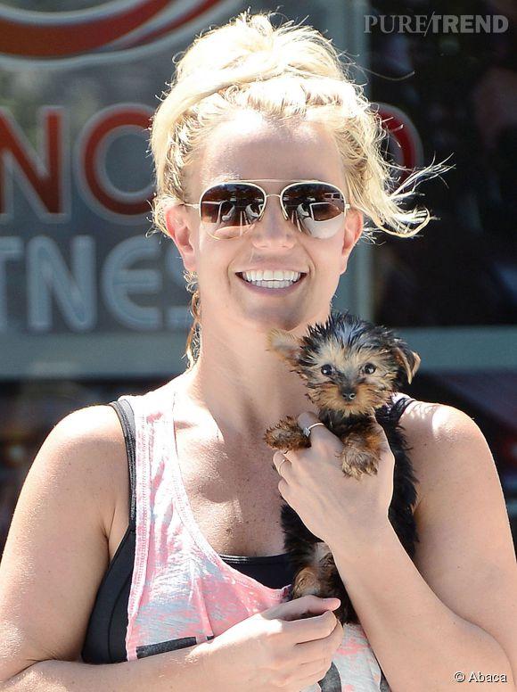Britney Spears a dépensé 31 000 dollars en 2013 rien que pour ses chiens.