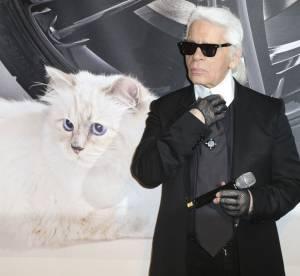 Karl Lagerfeld : prêt à se flinguer si Choupette disparaissait