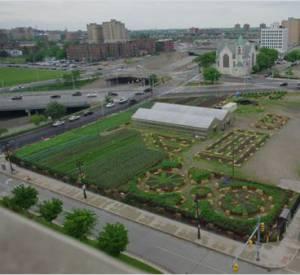 A Detroit, les habitants ont investi les friches industrielles pour aménager des jardins urbains.