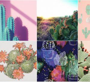 Tendance : le cactus ne manque pas de piquant